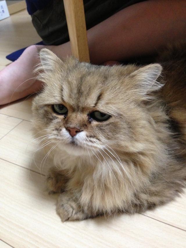 Фото грустного кота порода