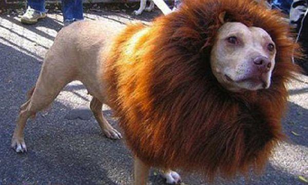 Pets real haircuts