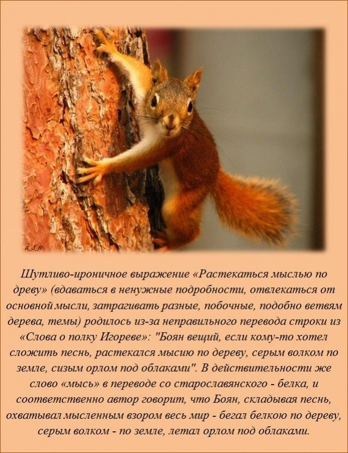 http://www.ochevidets.ru/userfiles/2015/03/09/4627af06c1_large.jpg