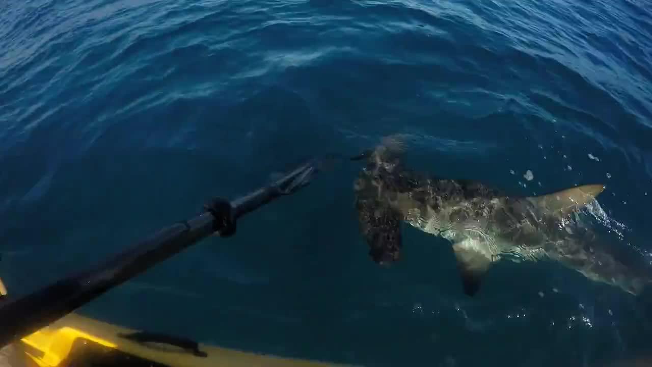 рыбак и акула молот