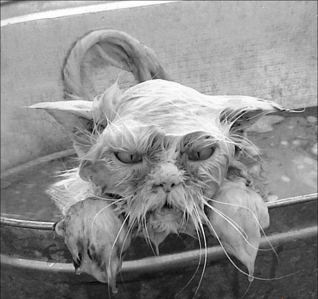 Мокрые киски домашнее фото извиняюсь