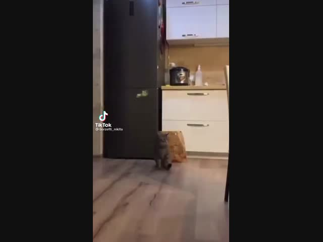 Cat - freestyler
